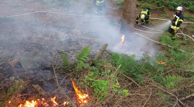 Waldbrand zwischen Velgen, Bornsen und Oldendorf II