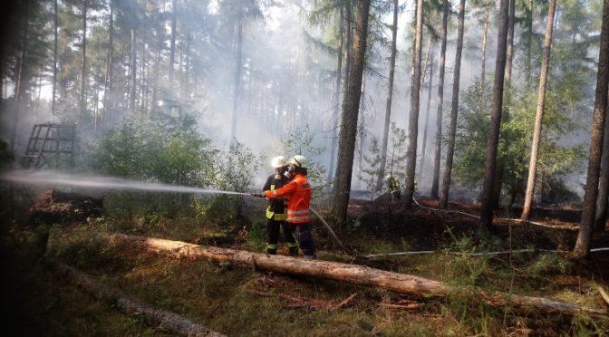 Feuer im Lintzeler Wald
