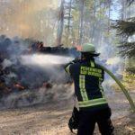 Flammen reichen bis in die Baumkronen – Hohe Waldbrandgefahr – Ersthelfer erfolgreich